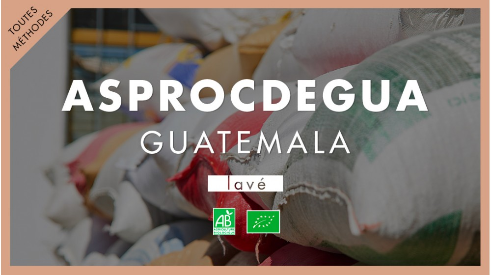 Café de spécialité Guatemala BIO Asprocdegua
